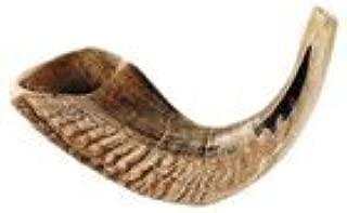 Rams Horn Shofar 12-13 In.