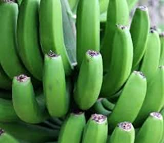 Fresh Green Organic Premium Grade A Matooke Banana, Guineo verde. The fruit is harvested green, you can then carefully peel it and then cook it; often mashed or pounded into a meal. (10 Count 5 Ib)