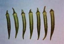 20 Samen Emerald Okra Non-GMO Heirloom Seeds Neue Samen für die Saison 2017