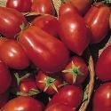 Il vous suffit de graines de tomate???Roma???1000?graines???Grande bo?te
