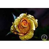 Grosses soldes! multi-coloré Flower Seeds Novel Plant Seeds Echalote pour Bricolage Jardin