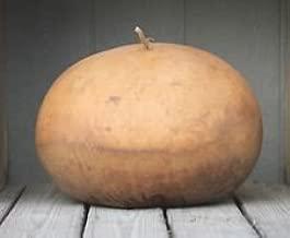 Gourd Seed: Bushel Gourds 12+ Seeds Fresh seed