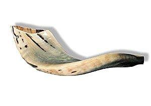 """Kleine RAM 's Rams Horn Schofar 22,9cm–12""""Medium aus Israel Neuer Jüdischer Musik"""