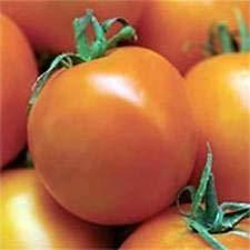 50 graines biologiques, Heirloom Valencia tomates Semences nouvelles graines pour la saison 2017