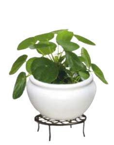 MKS Kitchen Beautiful Square Eco-Friendly Polyethylene Decorative Leafy and Flowering Pot/Planter/Gamla Indoor Outdoor Home/Balcony/Office/Living Room (ABP-13)