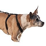 Walkabout Chest Halter (Large Chest 22-38