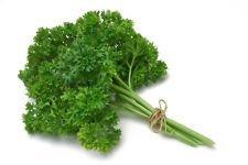 6.2g Heirloom géant italien persil Graines ~ 2200 ~ ct jardin de fines herbes ~ culinaire Spice