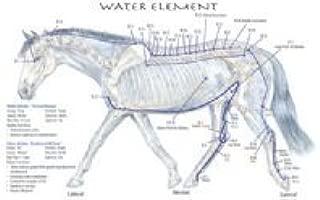 Equine 5 Element Meridian Chart Set of 4 Horse (Lake Forest Anatomicals Vet Models)|Lake Forest Anatomicals Vet Models