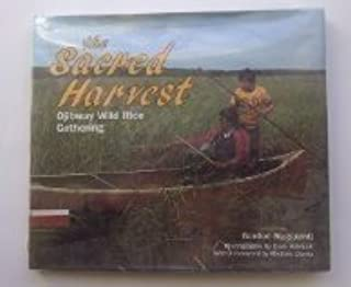 The Sacred Harvest: Ojibway Wild Rice Gathering (We Are Still Here : Native Americans Today)
