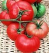 30 graines de Magnus - Saison Tomates mi