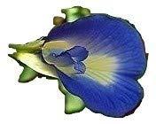 Potseed Clitoria ternatea, Blauer Schmetterling Erbse Blume, blau, 10 frische Samen