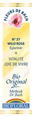 , Flor Wild Rose Bach