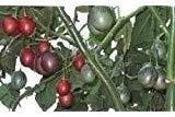 Baumtomate, Tamarillo, reich an Vitamin C, superleckerer süss-saur,20 Samen, von unserer ungarischen Farm samenfest, nur organische Dünger, KEINE Pesztizide, BIO hu-öko-01
