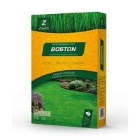 CESPED BOSTON 1 KG.