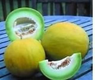 boule d or melon