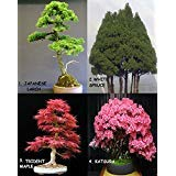 Huge Bonsai Pack 12 Types oF Trees Over 120+ Seeds Rare + Growing Instruction