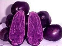 Kalash Nuovo 100pcs patate da seme di verdura a viola scuro Gardening