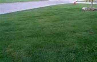 10 lbs. Rendition Turf-type Tall Fescue Grass Seeds