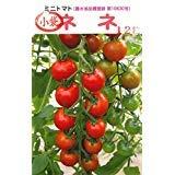 ミニトマト(ネネ)の種12粒入り(農水省品種登録 第10630号)