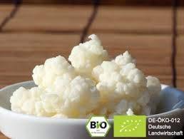 Milchkefir, Kefirknollen,Tibetanischer Pilz, Kefirpilz (12g) -Bio, Kefir von Goodrinks