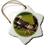 ymot101 Use, Minnesota, Mendota Heights, Wild Tom Turkeys Us24 Bfr0167 Bernard Friel Snowflake Ornament, Porcelain,