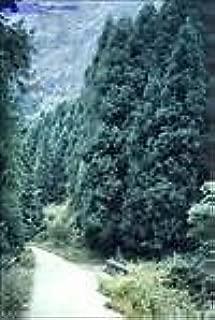 Best cryptomeria japonica yoshino japanese cedar Reviews