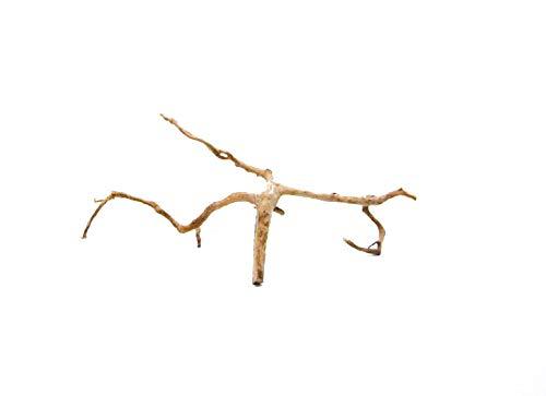 Moorkienwurzel Größe L Nr.6463 Fingerwurzel Echtholz Deko Aquascaping Aquarium Wurzel Moorkien Dekoration Landschaft Moos