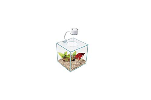 Marina Betta Kit Aquarium, kubusvorm, glas, met LED-lamp, 3,4 l