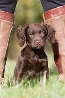 Working Cocker Spaniel Puppy & Boots Card