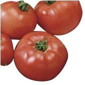 Tomate -Brandywine Rot- 10 Samen