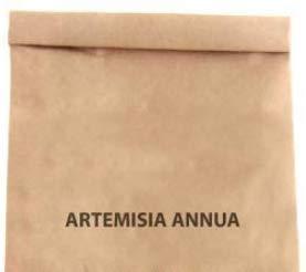 Semillas de Artemisa Annua Ajenjo Dulce o Ajenjo Chino 300 Semillas de Artemisia Annua