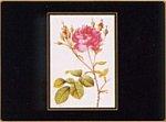 Lady Clare Klassische Untersetzer Redoute Rose