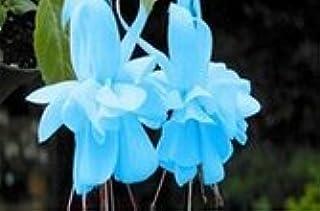 Mezcla de 200 PCS 5 tipos Semillas Fuchsia hybrida Voss linternas de flores de la begonia Malus spectabilis flores decorat...