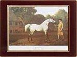 Clare Racehorses Klassische Untersetzer Lady