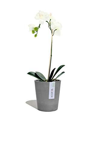 Ecopots Pot de fleurs Morinda - Pot à orchidée - 14 x 16 cm - En plastique - Écologique - Pour l'intérieur et l'extérieur - Gris