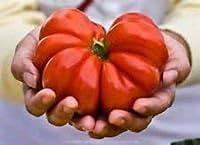 Costolutoジェノベーゼトマトの種!ユニークな形の家宝!20種の櫛。S/H