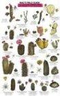 Cacti, Shrubs, Trees (Mac's Guides) - Craig MacGowan