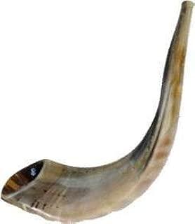 Best sheep horn instrument Reviews