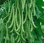 Bulk Organic Kentucky...image