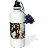 liandun Danita Delimont – Primates – Madagascar, Coquerels Candidus, propithecus Verreauxi coquereli. – 21oz Sport bouteille d'eau