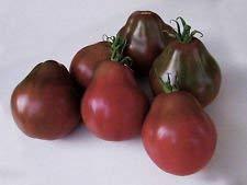 VISA STORE Russische Trüffel Tomato 75 Samen Trifele Große Früchte Produktive