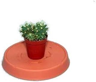 Cactus Pequeño 5cm Planta Natural en Maceta para Decorar