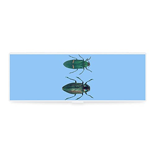 Estuche de lápices transparente pequeño y grande con diseño de animales y escarabajo de animales para coleccionar herramientas de oficina, woker hombres y mujeres unisex