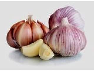 Garlic Bulb (5 Bulbs), Fresh Siberian HARDNECK Garlic Bulb for Planting and Growing Your OWN Garlic Or Eating