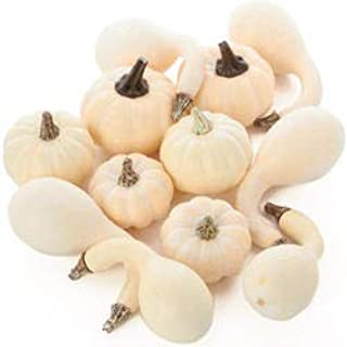 Factory Direct Craft Package of 24 Pieces Faux Baby Boo Pumpkins and Gourds Assortment for Holida Decorations and Crafting