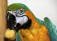 Assortiment de fruits Cups - Jelly Parrot Friandises - Baignoire de 24