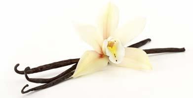 OliveNation Premium Safety and trust Bourbon-Madagascar Vanilla Ounce Beans 16 Phoenix Mall