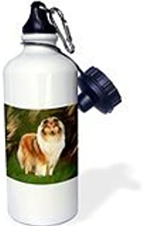 Wild Bramble Dogs Border Collie - Collie Sports Water Bottle 21 Oz Twin Sides
