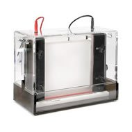 Thermo Fisher Owl P8DS-1 Dual Gel Vertical Electrophoresis System with Caster, 8-10cm L x 10cm W Gel Size