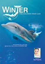 Winter, The Dolphin That Can by David Yates